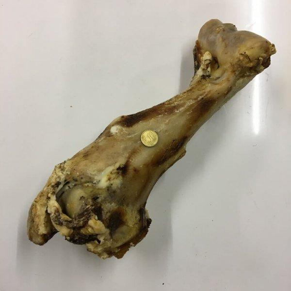 Jumbo Knochen vom Rind